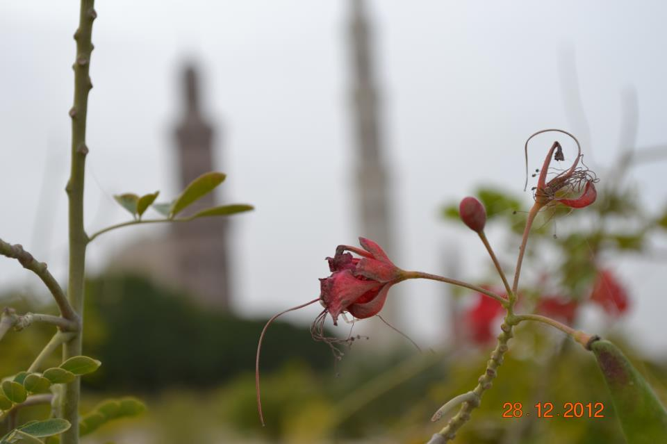 Every petal sings the glory of Allah. — at Sultan Qaboos Grand Mosque.